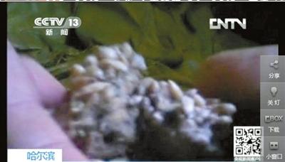 记者暗访冰淇淋厂 变绿长毛瓜子仁加工冰淇淋 图片欣赏