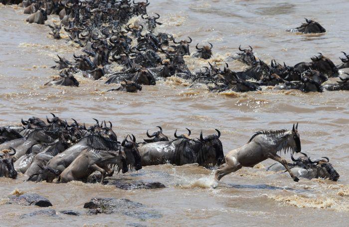 中国评论新闻:直击塞伦盖蒂动物大迁徙(组图)